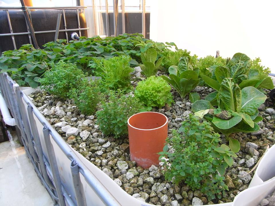 Grow Bed System