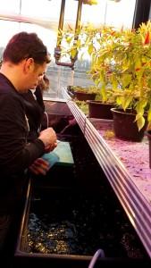 Leonardo_visit_to_the_aquaponics_test_plant_of_IGFF_1