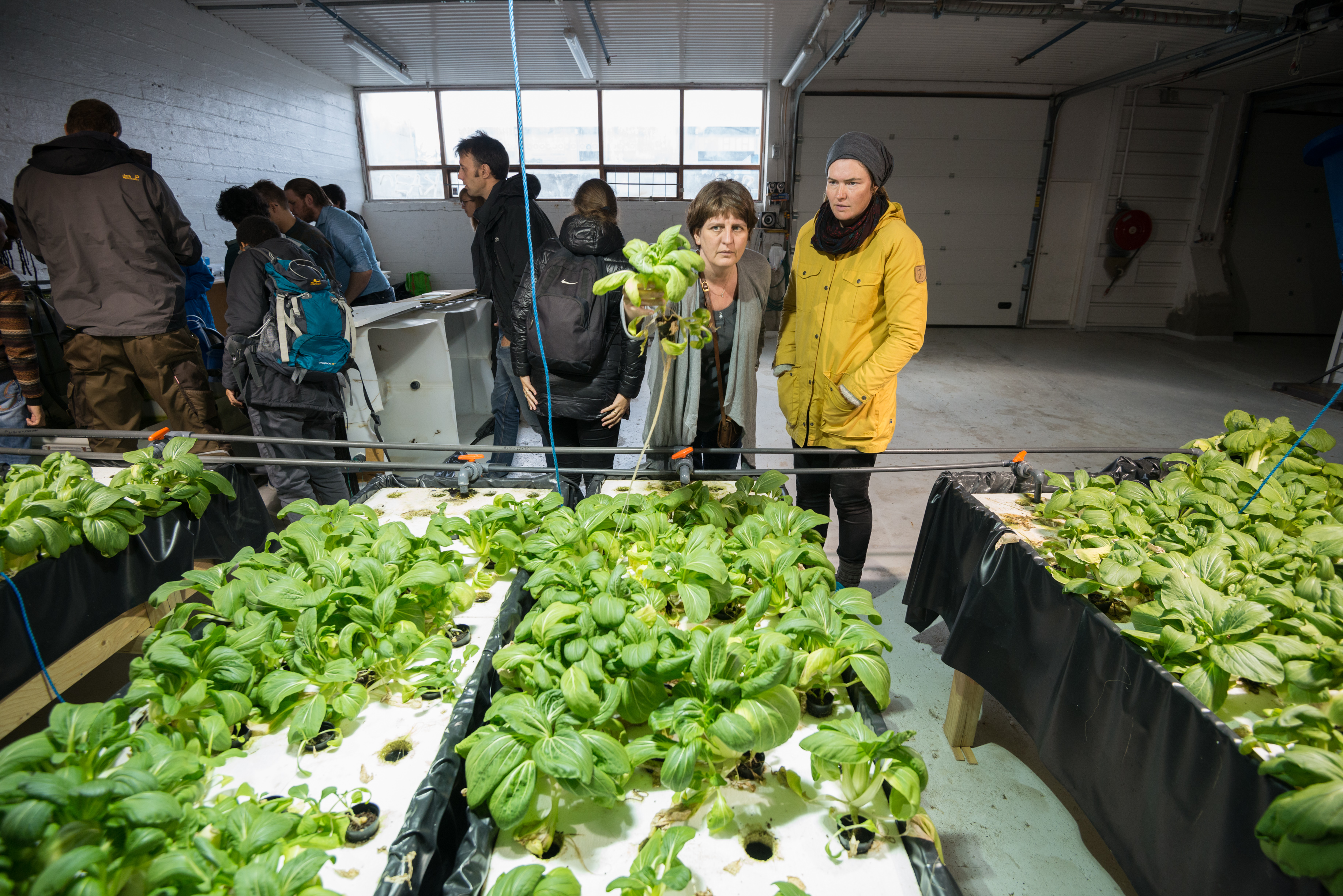 Job opportunities for MSc students | Aquaponics is | Sustainable